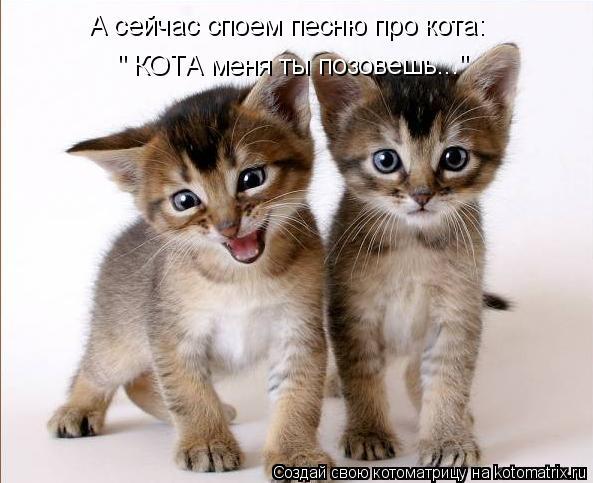 """Котоматрица: А сейчас споем песню про кота: """" КОТА меня ты позовешь..."""""""