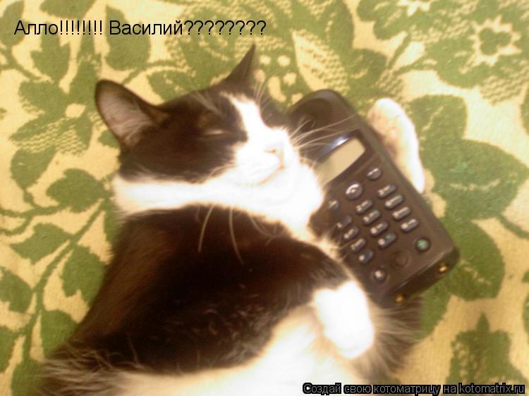 Котоматрица: Алло!!!!!!!! Василий????????