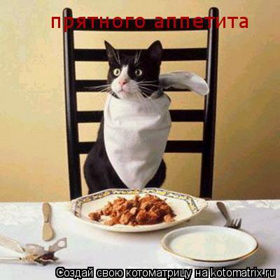 Котоматрица: прятного аппетита