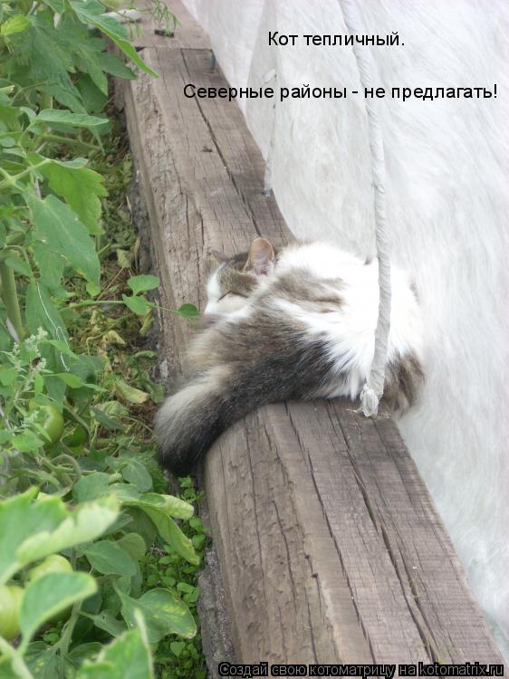 Котоматрица: Кот тепличный.  Северные районы - не предлагать!
