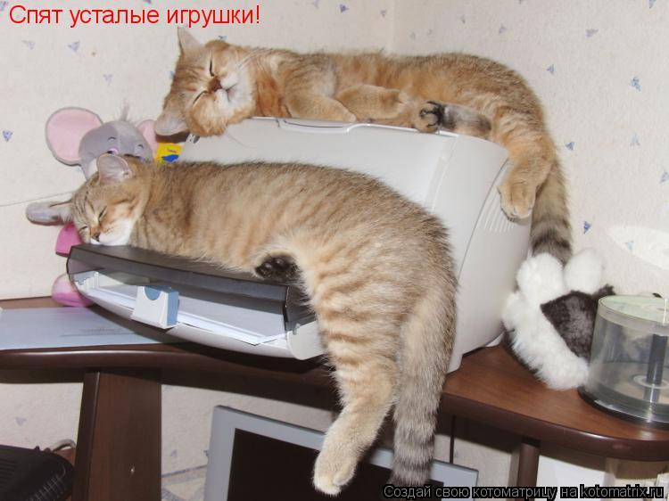 Котоматрица: Спят усталые игрушки!