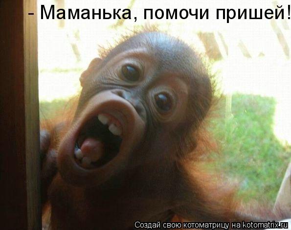 Котоматрица: - Маманька, помочи пришей!