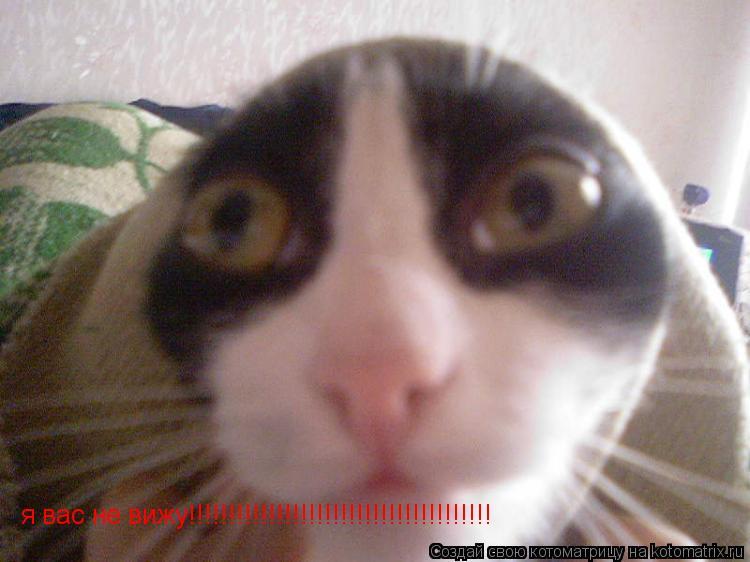 Котоматрица: я вас не вижу!!!!!!!!!!!!!!!!!!!!!!!!!!!!!!!!!!!!!!