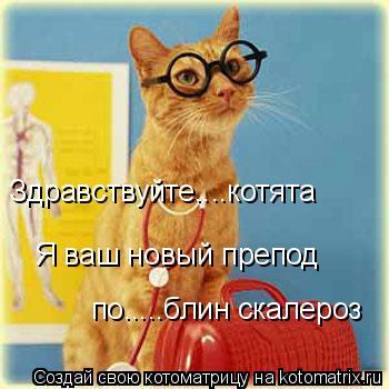 Котоматрица: Здравствуйте....котята Я ваш новый препод по.....блин скалероз