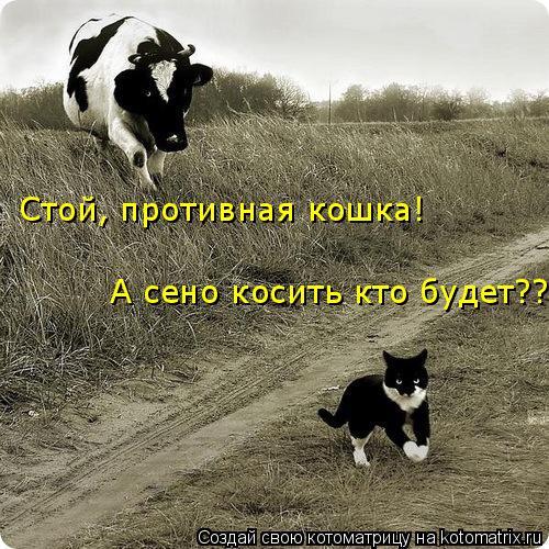 Котоматрица: Стой, противная кошка! А сено косить кто будет??