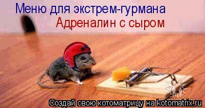 Котоматрица: Меню для экстрем-гурмана Адреналин с сыром