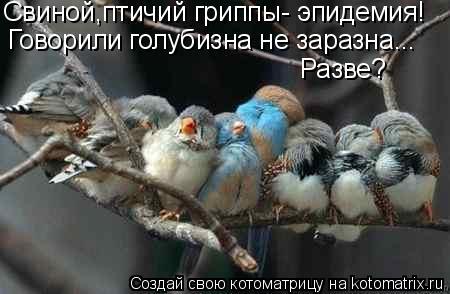 Котоматрица: Свиной,птичий гриппы- эпидемия! Говорили голубизна не заразна... Разве?