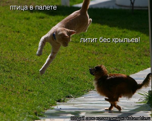 Котоматрица: птица в палете литит бес крыльев!