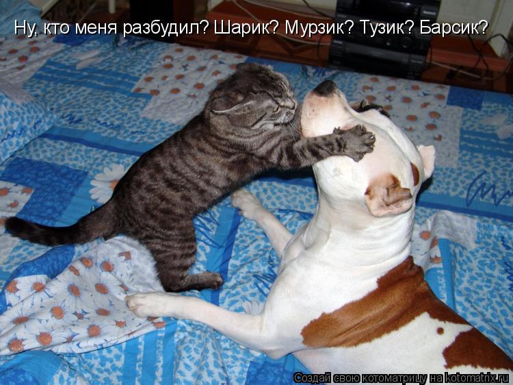 Котоматрица: Ну, кто меня разбудил? Шарик? Мурзик? Тузик? Барсик?