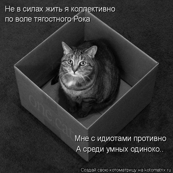 Котоматрица: Не в силах жить я коллективно по воле тягостного Рока А среди умных одиноко.. Мне с идиотами противно
