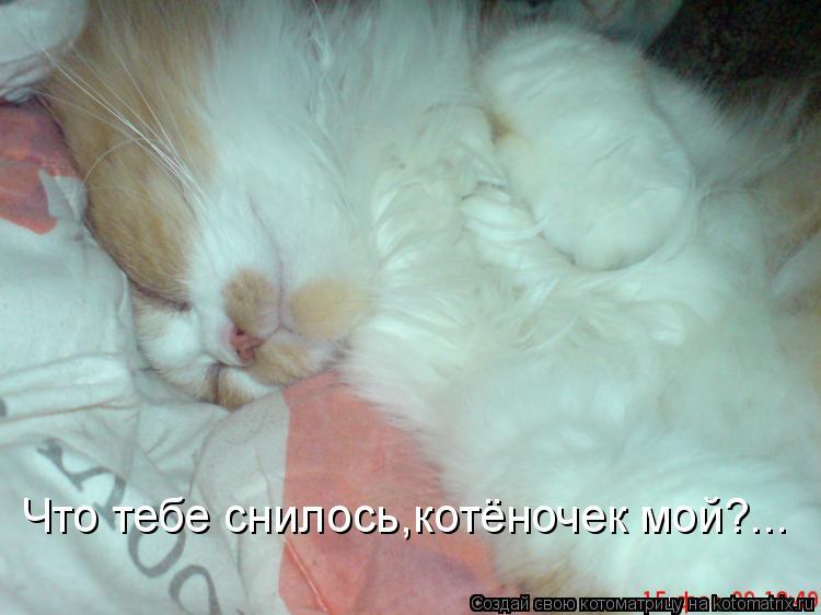 Котоматрица: Что тебе снилось,котёночек мой?...