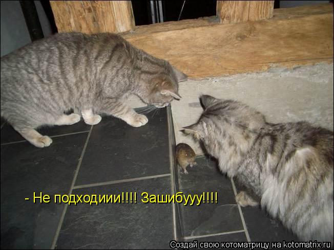 Котоматрица: - Не подходиии!!!! Зашибууу!!!!