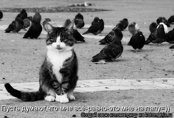 Котоматрица: Пусть думают,что мне всё-равно-это мне на лапу=))