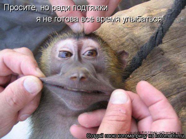 Котоматрица: Просите, но ради подтяжки  я не готова всё время улыбаться!