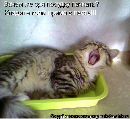 Котоматрица: Зачем же зря посудку пачкать? Зачем же зря посудку пачкать? Кладите корм прямо в пасть!!! Кладите корм прямо в пасть!!!