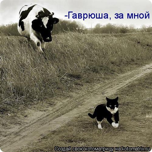 Котоматрица: -Гаврюша, за мной