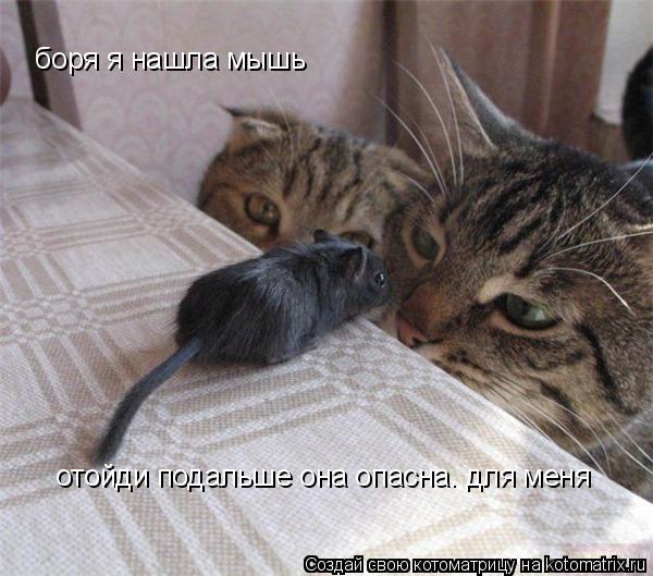 Котоматрица: боря я нашла мышь  отойди подальше она опасна. для меня