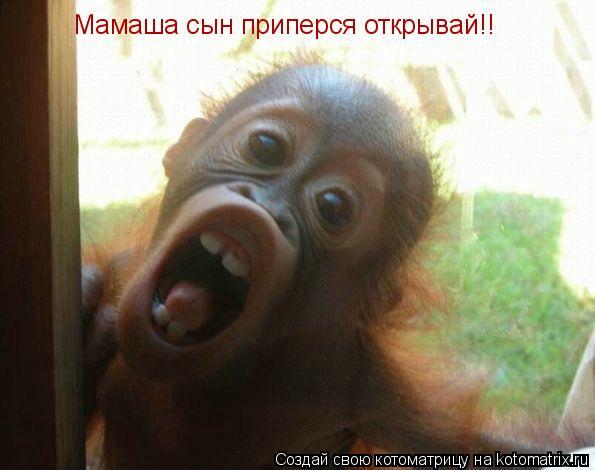 Котоматрица: Мамаша сын приперся открывай!!
