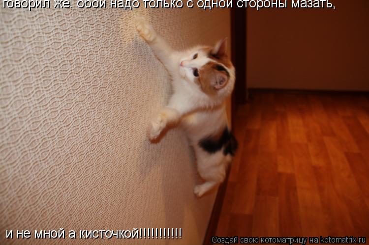 Котоматрица: говорил же, обои надо только с одной стороны мазать, и не мной а кисточкой!!!!!!!!!!!