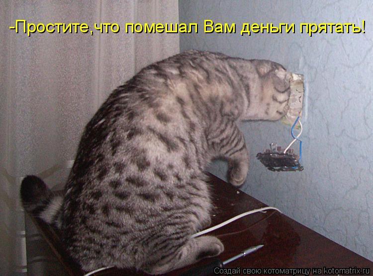 Котоматрица: -Простите,что помешал Вам деньги прятать!