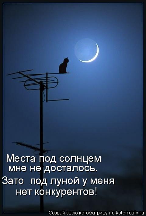 Котоматрица: Места под солнцем  мне не досталось. Зато  под луной у меня нет конкурентов!