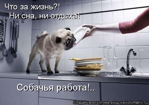 Котоматрица: Что за жизнь?! Ни сна, ни отдыха! Собачья работа!..