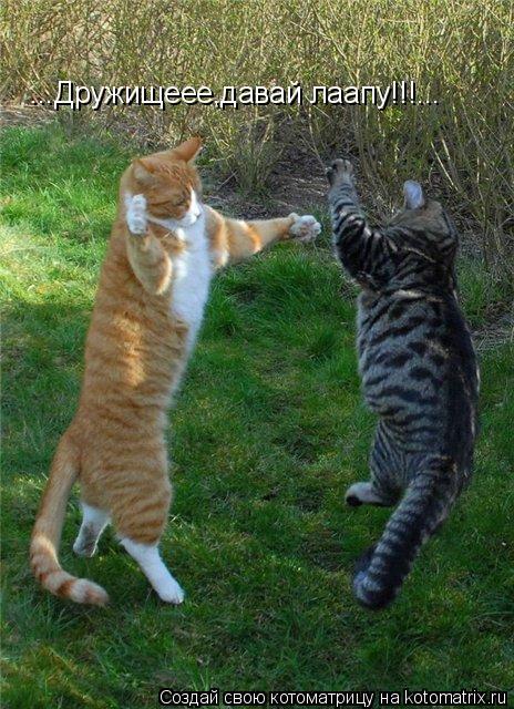 Котоматрица: ...Дружищеее,давай лаапу!!!...