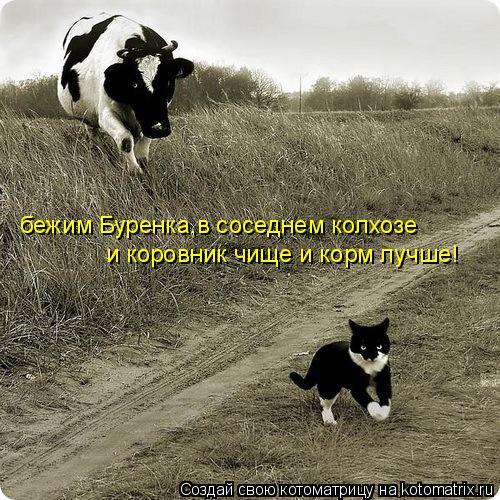 Котоматрица: бежим Буренка,в соседнем колхозе и коровник чище и корм лучше!