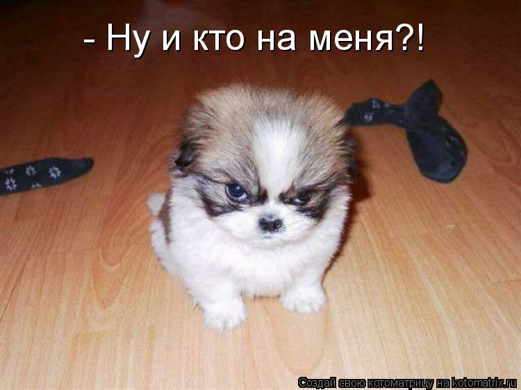 Котоматрица: - Ну и кто на меня?!
