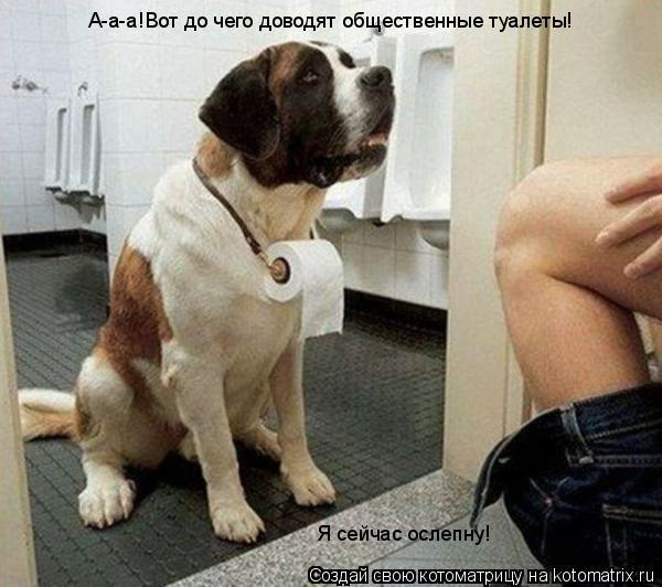 Котоматрица: А-а-а!Вот до чего доводят общественные туалеты! Я сейчас ослепну!