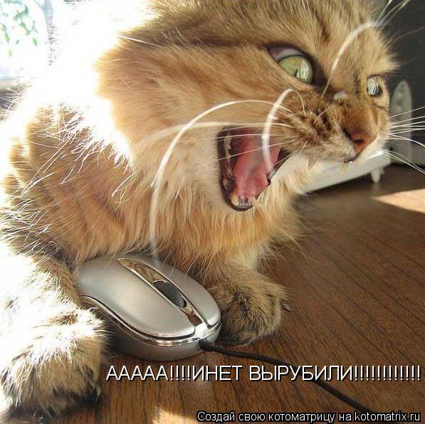 Котоматрица: ААААА!!!!ИНЕТ ВЫРУБИЛИ!!!!!!!!!!!!