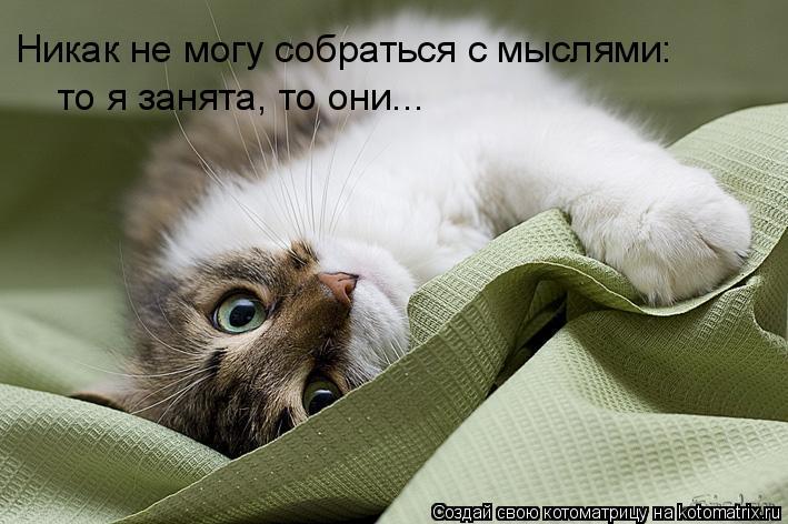 Котоматрица: Никак не могу собраться с мыслями: то я занята, то они...