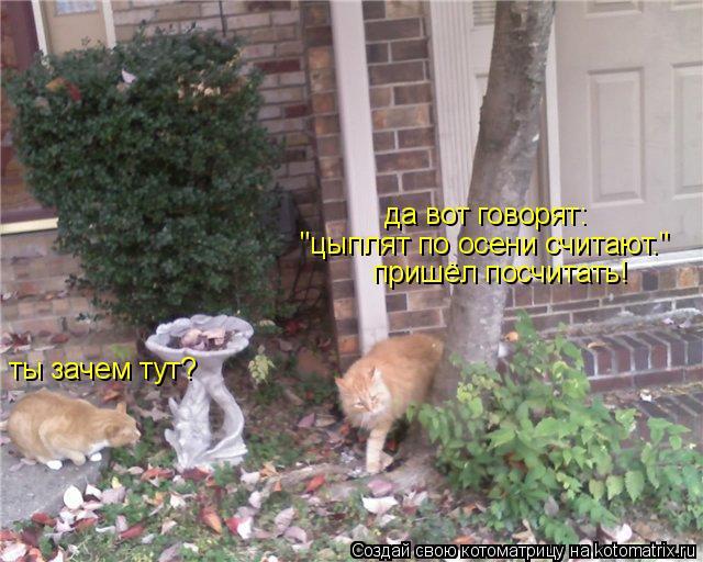 """Котоматрица: ты зачем тут? да вот говорят: """"цыплят по осени считают."""" пришёл посчитать!"""
