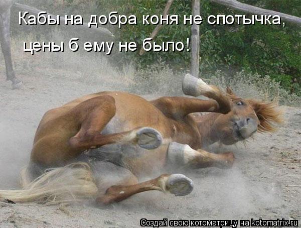 Котоматрица: Кабы на добра коня не спотычка,  цены б ему не было!