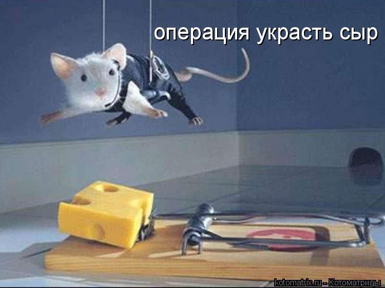 Котоматрица: операция украсть сыр