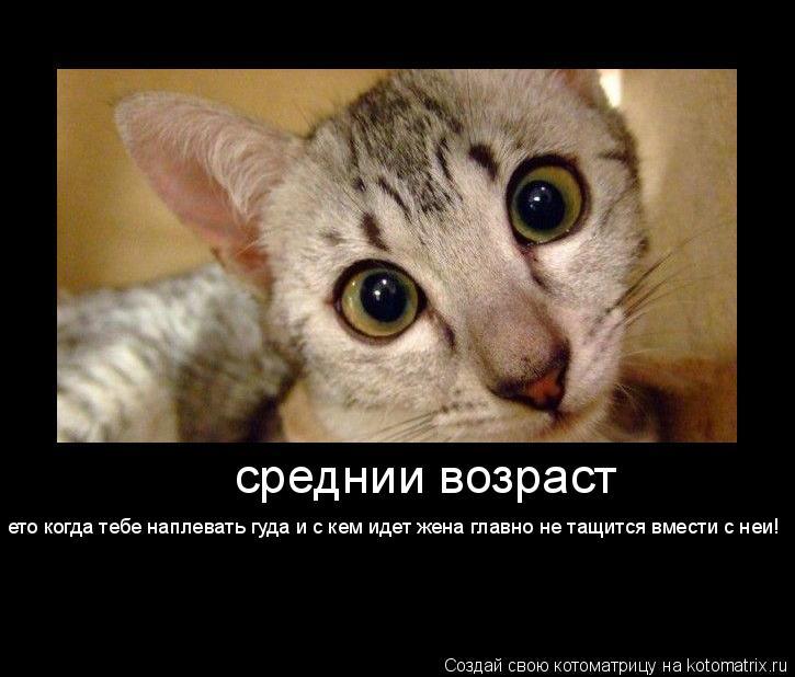 Котоматрица: среднии возраст ето когда тебе наплевать гуда и с кем идет жена главно не тащится вмести с неи!