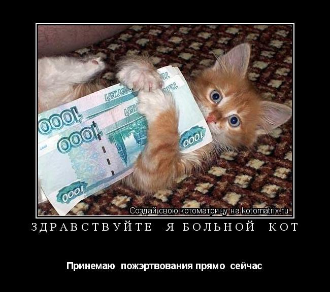 Котоматрица: Здравствуйте  я больной  кот Принемаю  пожэртвования прямо  сейчас