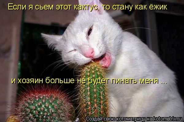 Котоматрица: Если я сьем этот кактус, то стану как ёжик и хозяин больше не будет пинать меня ...