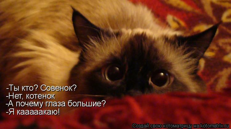 Котоматрица: -Ты кто? Совенок? -Нет, котенок -А почему глаза большие? -Я кааааакаю!
