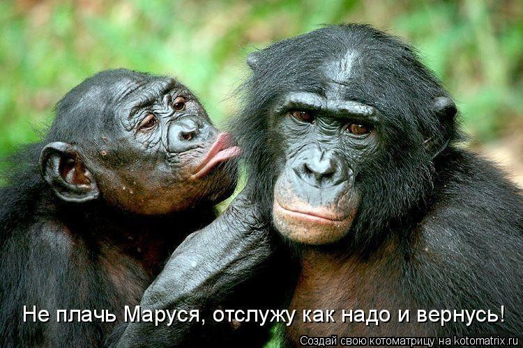 Котоматрица: Не плачь Маруся, отслужу как надо и вернусь!