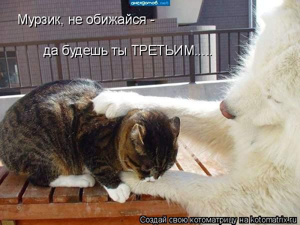 Котоматрица: Мурзик, не обижайся - да будешь ты ТРЕТЬИМ.....