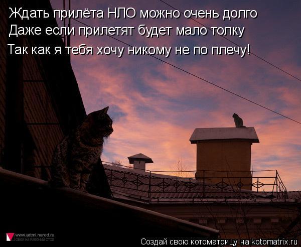 Котоматрица: Ждать прилёта НЛО можно очень долго Даже если прилетят будет мало толку Так как я тебя хочу никому не по плечу!