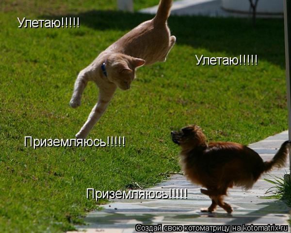 Котоматрица: Улетаю!!!!! Улетаю!!!!! Приземляюсь!!!!! Приземляюсь!!!!!