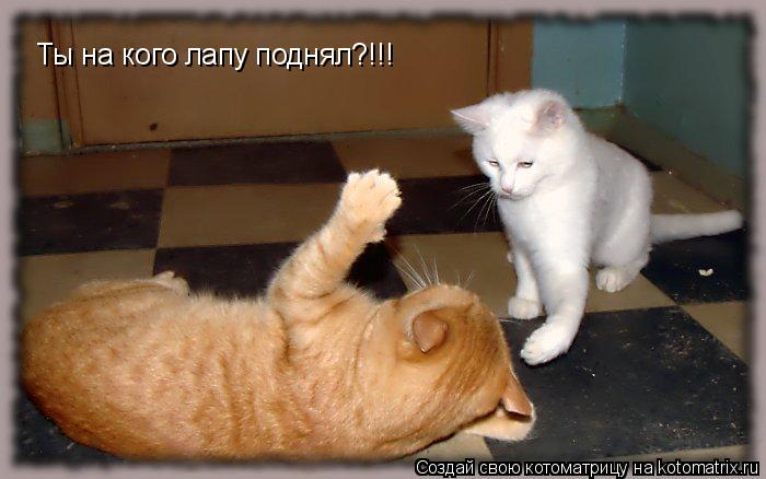 Котоматрица: Ты на кого лапу поднял?!!!