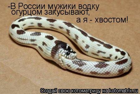 Котоматрица: -В России мужики водку   огурцом закусывают, а я - хвостом!