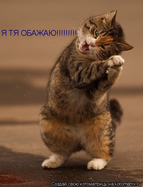 Котоматрица: Я ТЯ ОБАЖАЮ!!!!!!!!!