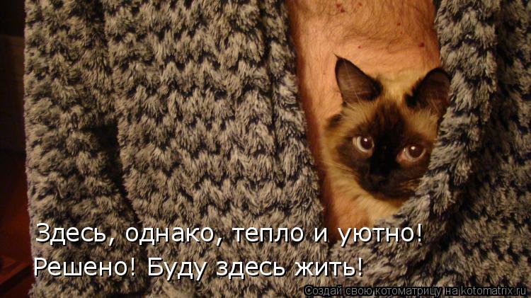 Котоматрица: Здесь, однако, тепло и уютно! Решено! Буду здесь жить!