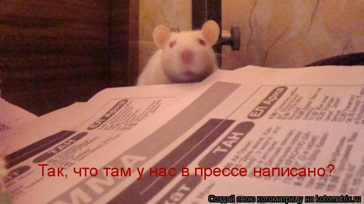 Котоматрица: Так, что там у нас в прессе написано?