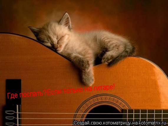 Котоматрица: гДЕ ПОСПАТЬ! Где поспать? Где поспать? Где поспать?Если только на гитаре! Где поспать?Если только на гитаре!