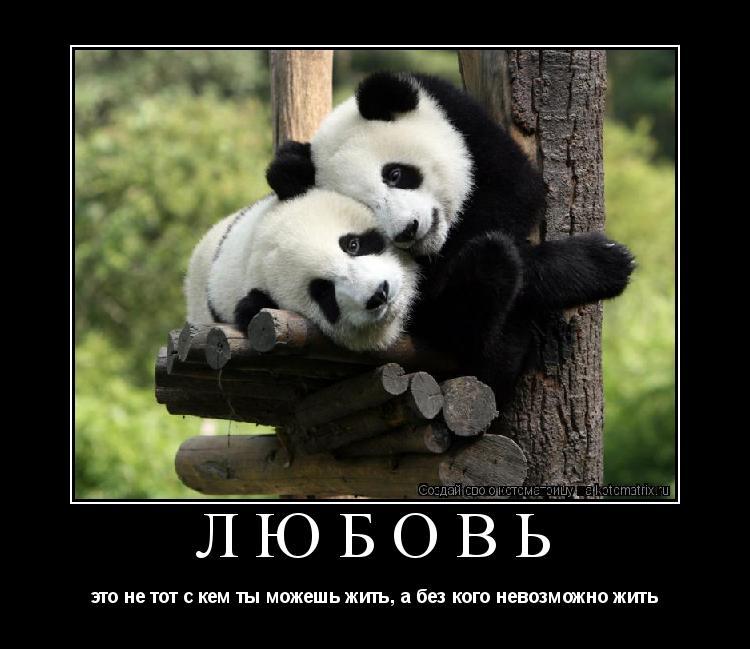 Котоматрица: любовь это не тот с кем ты можешь жить, а без кого невозможно жить